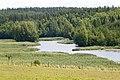 Kiskonjoki5.jpg