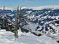 Knorriger Baum Skigebiet Horberg-Penken mit Blick Richtung Schwendau - panoramio.jpg