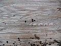 Knotty wood.jpg
