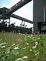 Kokerei Zollverein - Koksbatterien-Blumenwiese.jpg