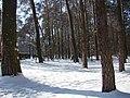 Koniec zimy w połowie marca - Wolica las - 01 - panoramio.jpg