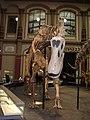 Kostra dikreosaura.jpg