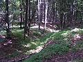 Krumvald (hrad) - zbylý příkop.JPG