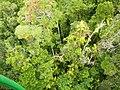 Kuranda QLD 4881, Australia - panoramio (47).jpg
