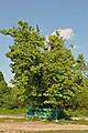 Kurivtsi-Lypa-Franka-15058354.jpg