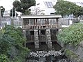 Kurokawa-Himon 20131028-3.JPG