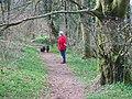Ladies Wood, South Brent - geograph.org.uk - 1716066.jpg