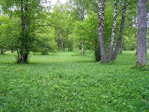 Wooded meadow - Laelatu wooded meadow, Estonia.