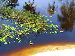 Pequeno lago de água doce na Praia da Caueira