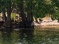Lake Kerkini 5.jpg