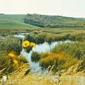 Lake near the gates of the city of Chisinau (1980). (21709202511).jpg
