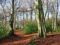 Lambridge Wood - geograph.org.uk - 626582.jpg