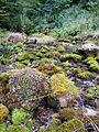 Landscape of Bjelusa - 7408.CR16.jpg