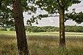 Landschaftsschutzgebiet Moritzburger Kleinkuppenlandschaft (d 67) Bild 2.jpg