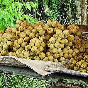Lansium parasiticum - L. parasiticum sold in a bunch in a roadside stall in West Kutai