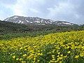 Lar, Winter & Spring لار، بهاروزمستان درکوه قوشخانه - panoramio.jpg