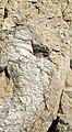 Large potassium feldspar & quartz crystals in pegmatitic granite (Ruggles Pegmatite, Devonian; Ruggles Pegmatite Mine, New Hampshire, USA) 2 (37145900621).jpg