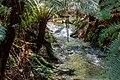Lavers Hill (AU), Melba Gully State Park -- 2019 -- 1152.jpg