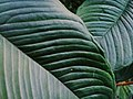 Leaf ocsigen.jpg