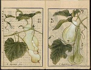 Leiden University Library - Seikei Zusetsu vol. 26, page 006 - 苦瓠, 懸瓠 - Lagenaria siceraria (Molina) Standl., 1804.jpg