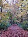 Leigh Woods -Autumn Leaves - November 2013 - panoramio.jpg