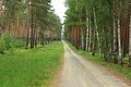 Lieberoser Heide Leichhardt Trail 01.JPG