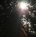 Light (1396659647).jpg