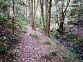Lilli Pilli Rainforest - Swaines Creek.JPG