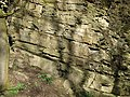 Limestone Exposure near Munslow, Shropshire - geograph.org.uk - 676649.jpg