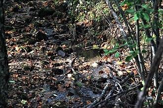 Barbours Creek Wilderness - Lipes Branch, at Va 617