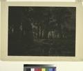 Lisière de forêt, effet de soir (NYPL Hades-575114-1227163).tiff