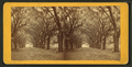 Live Oak Avenue, Bonaventure, from Robert N. Dennis collection of stereoscopic views 11.png