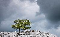 Lizarraga - Haya y nubes 01.jpg