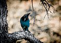 Lonely Bird (235947303).jpeg