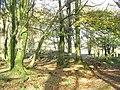 Looking NE towards the remains of Plas Uwch Llyn - geograph.org.uk - 272534.jpg