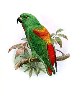 1862 in birding and ornithology