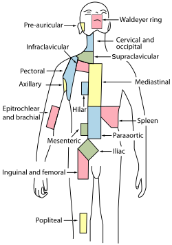 Lymph node regions.svg