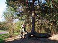 MOs810 WG 15 2016 (Pyzdry Forest II) (Kirchol, Kosciolkow, Zagorow, old jewish cemetery) (6).JPG