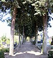 Maasbree - Achter de Hoven bij 13a Middenpad R.K. Begraafplaats.jpg