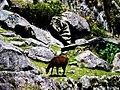 Machu Picchu (Peru) (14907188220).jpg