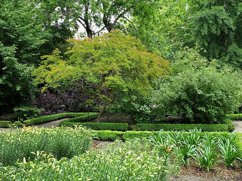 File madrid jardin botanico wikimedia commons for Jardin botanico madrid