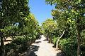 Malta - Siggiewi - Triq il-Buskett - Buskett Gardens 69 ies.jpg
