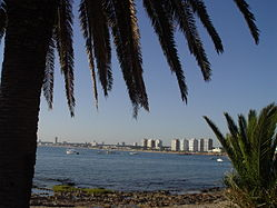 The Punta del Este skyline behind palm leaves
