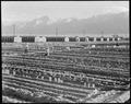 Manzanar Relocation Center, Manzanar, California. Evacuees of Japanese ancestry are growing flouris . . . - NARA - 537987.tif