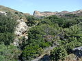 Maquis and garrigue in Corsica3.jpg