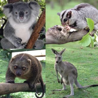 Marsupial - Image: Marsupialia collage