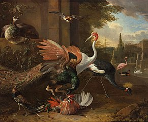 A Peacock Attacking a Rooster