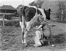 wat wordt er van melk gemaakt