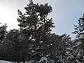 Melluzu kapas - panoramio (5).jpg