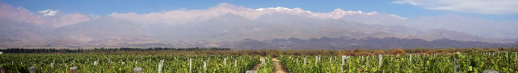 Mendoza banner vineyards.jpg
